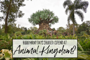 How many days should I spend at Animal Kingdom?